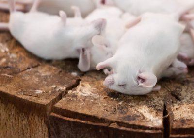Kill Rodents Dead with JBC
